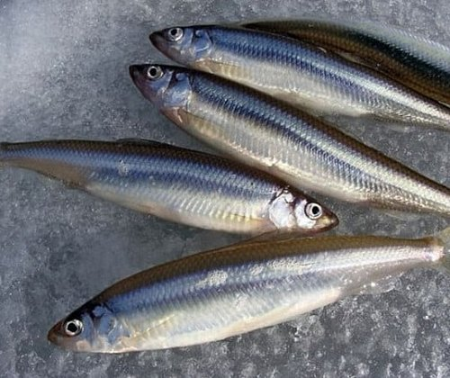 In the center of St. Petersburg there will be a monument to smelt